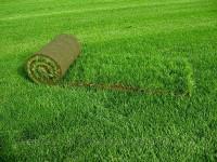 Устройство газонов