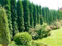 Озеленение участка