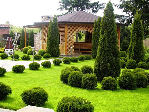 Компании по ландшафтному дизайну - Деревья на газоне