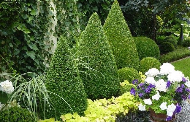 Подбор растений для сада - Цветы среди камней