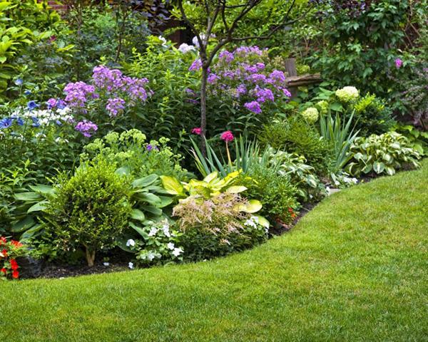 Подбор растений для цветника - Белые цветы