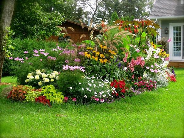 Подбор растений для цветника - Красные цветы