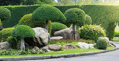 Деревья в ландшафтном дизайне - оформления садового участка