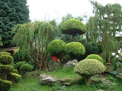 Деревья в ландшафтном дизайне - декорирование сада
